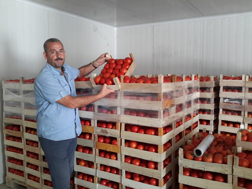 Sales Increase for Farmers, Collection Centers and Traders