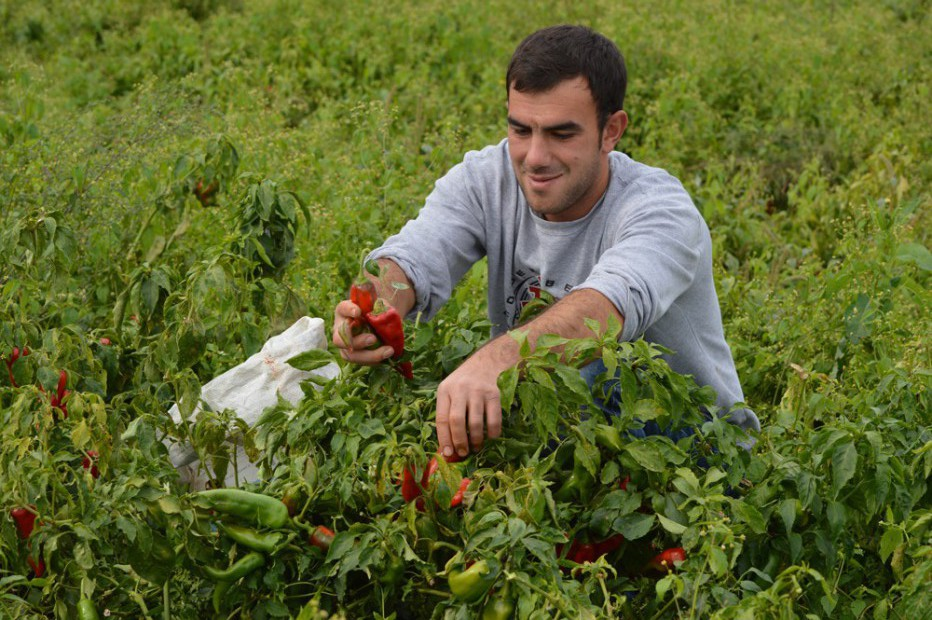 Cooperation Drives Progress in Strengthening Kosovo Agriculture